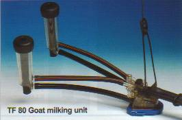TF80 low line goat milking claw