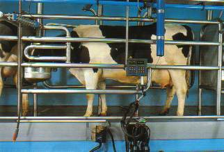 Tandem Milking Parlours From Dc Engineering